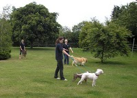 Dog Boarding Kennels In Peterborough Uk