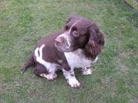 Dog Kennels Bridlington